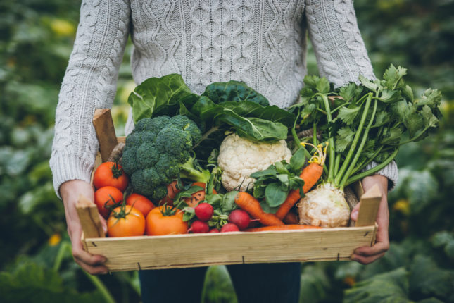 7 Good Reasons to Try a Plant Based Diet
